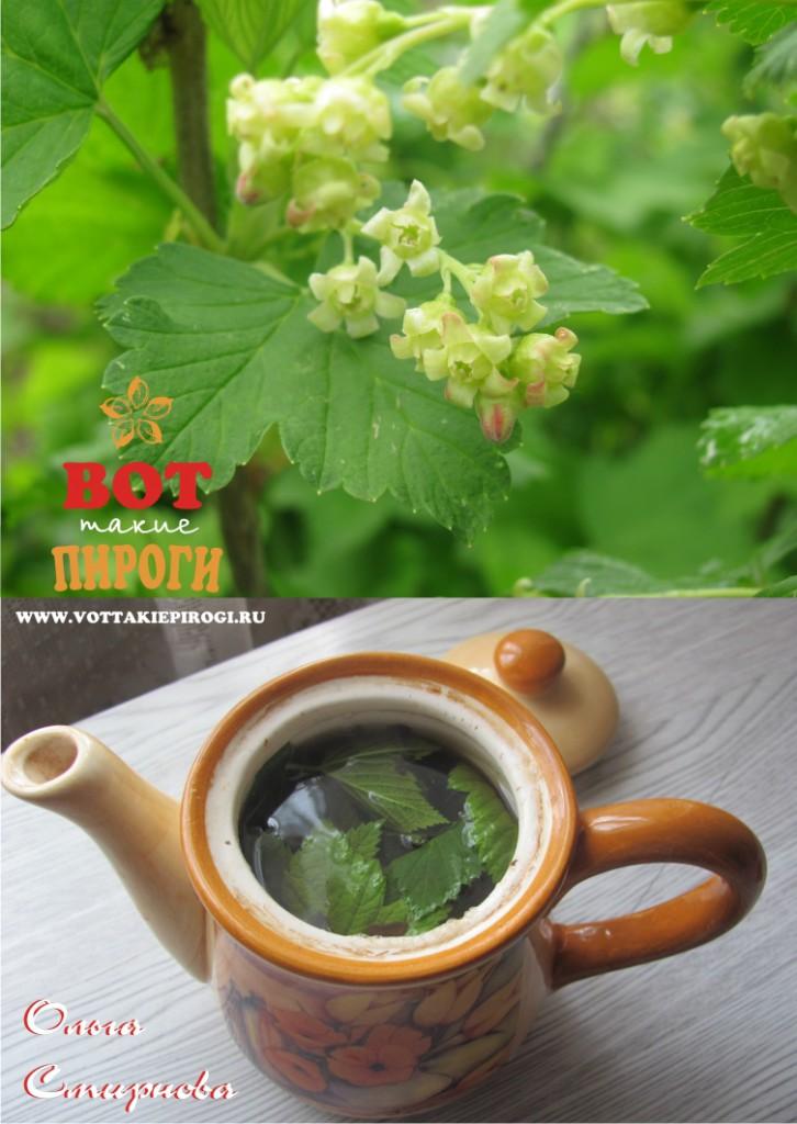 Чай с из листьев черной смородины